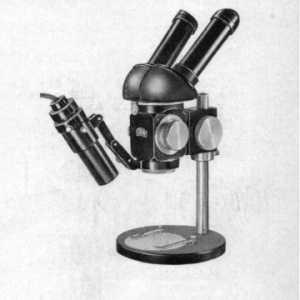 Stereomikroskop II